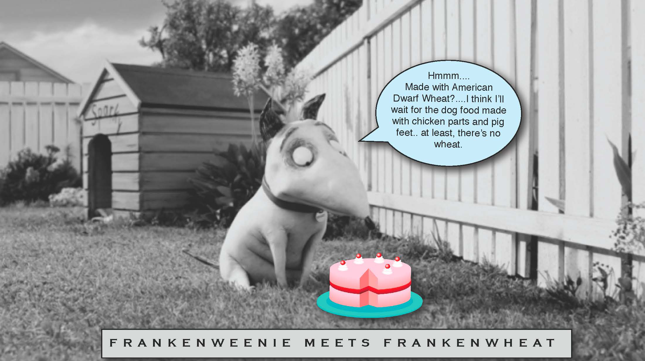 Frankenweenie Meets Frankenwheat - in David Kirkpatrick's blog, Travels In Transmedia