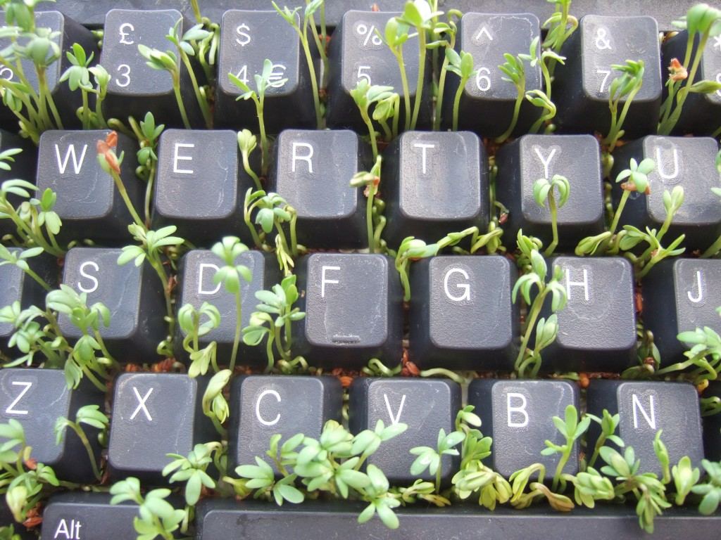 An Old Keyboard Taken Over by New Growth